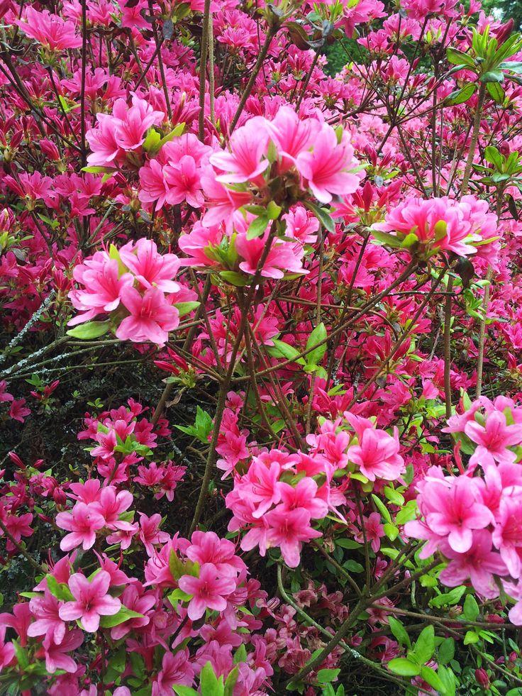 Flowers of the Netherlands ( photo credits : Ingrid Jonkers )