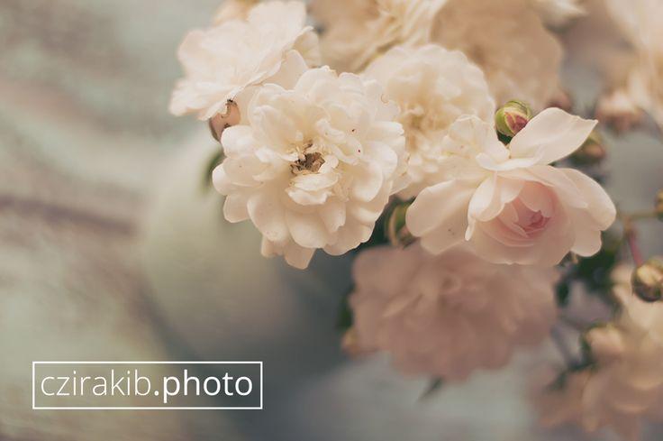 rózsák nyár végén