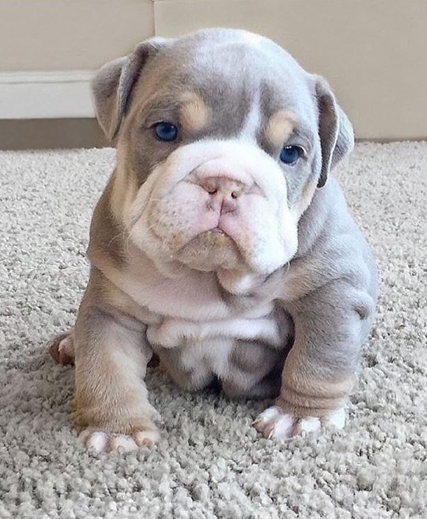 The 100 Cutest Animals Of All Time List Inspire