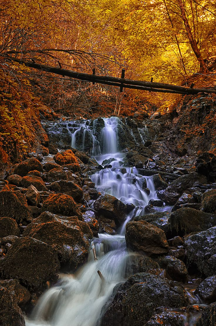 Bright autumn in Yedigöller National Park in Bolu, Turkey #travel #free #budget