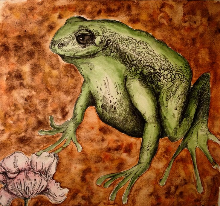 Elettra Tomei- acquerello e penna china rana