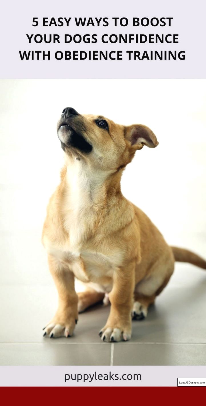 Potty Training Tips For A Puppy And Pics Of How To Train A Dog To