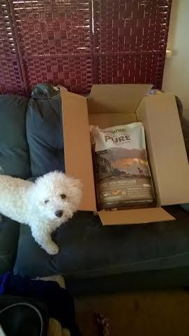 Canidae Grain Free Pure Dog Food Review #ad #HealthyPetHappyPet