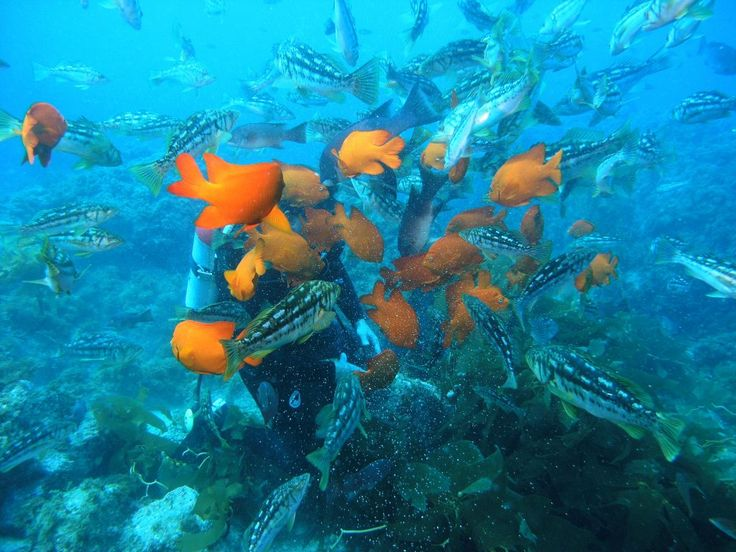 Scuba diving on Catalina Island. Photo courtesy Catalina Divers Supply