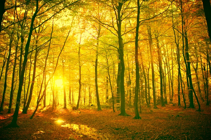 An incredibly gorgeous forest in Norway. This makes me think of crisp fall mornings.