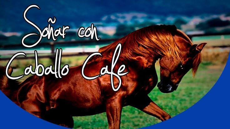 ¿Qué significa soñar con caballo marrón o café? | El significado de los ...
