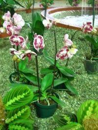 rośliny doniczkowe zimą, zimowa pielęgnacja roślin pokojowych, ogród, ogrodnik