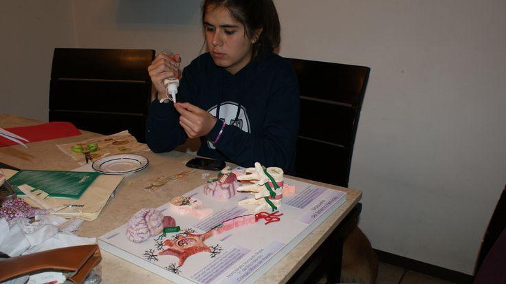 Mi hija realizando su maqueta del Sistema Nervioso. Realizada en base de Cartón, esculpida con estilerte en unicel, terminada con pinturas acrílicas. plastilina, resistol blanco y silicón frío