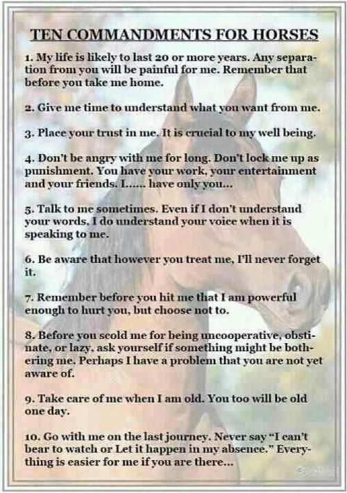 10 horse commandments.                                                                                                                                                                                 More