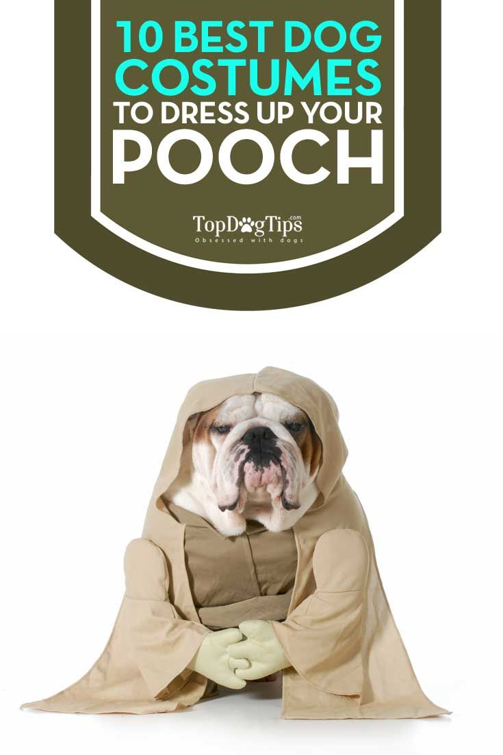 2016 Best Dog Costumes: Ultimate Top 10 List. Halloween is just around the corner and people are preparing their spookiest and craziest costumes for both themselves and their pets. However, you don't need to just dress your dog up on Halloween for fun – you can dress them up anytime for any occasion. Dogs look hilariously cute in some of these best dog costumes any day of the year. #dogs #costumes #pets #dogcostumes