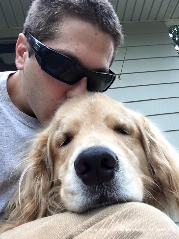 Ray Charles Blind Golden Retriever Steals Hearts Golden Retriever Dogs Golden Retriever Retriever