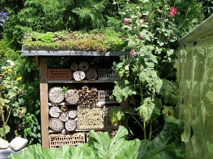 169 besten wildbienen hotels insekten nisthilfen bilder auf pinterest bug hotel. Black Bedroom Furniture Sets. Home Design Ideas