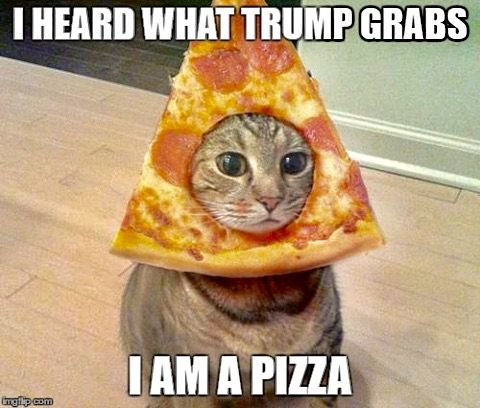 e7c13a7c4312cc1004a9c815e890902c fat animals funny animals 53 best no to trump images on pinterest 2016 election, jokes and,Pizza Cat Meme