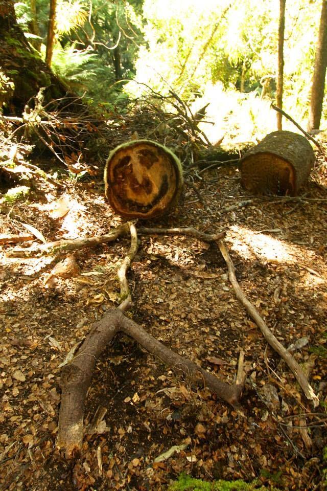 See even the trees are happy you are here #Lake Waikaremoana Great Walk North Island New Zealand