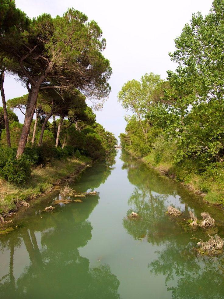 **Pineta di Milano Marittima (pine forest) - Cervia Milano Marittima, Italy