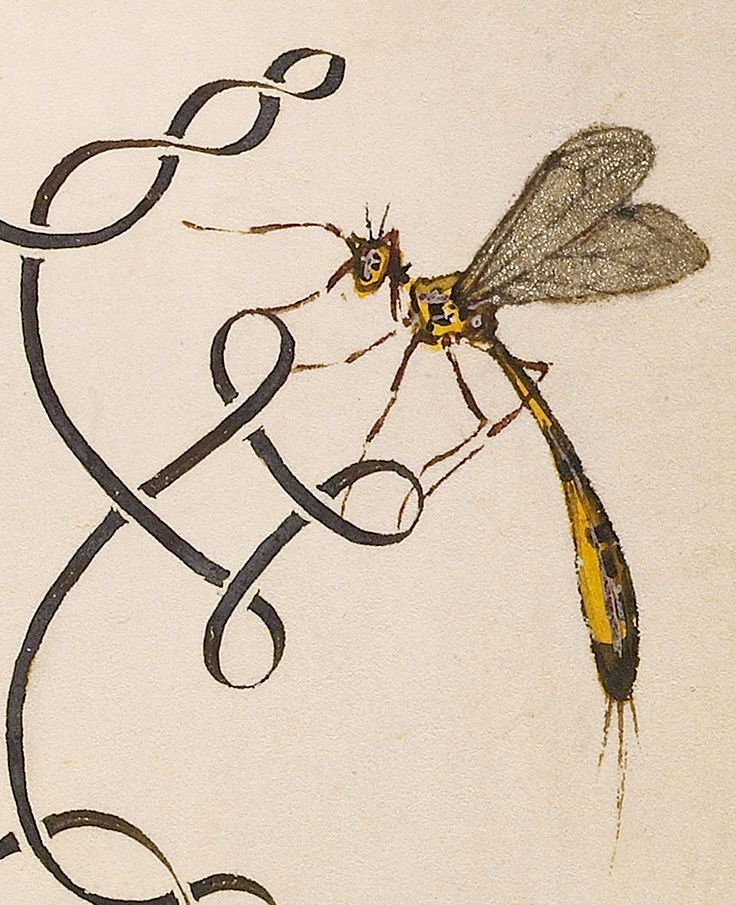Insects, Basil Thyme, and Land Snails (detail), Joris Hoefnagel, Georg Bocskay, 1591-96, script 1561-62