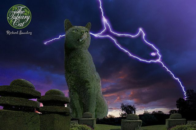 A tasty lightning strike for The Topiary Cat! http://www.facebook.com/topiarycat: