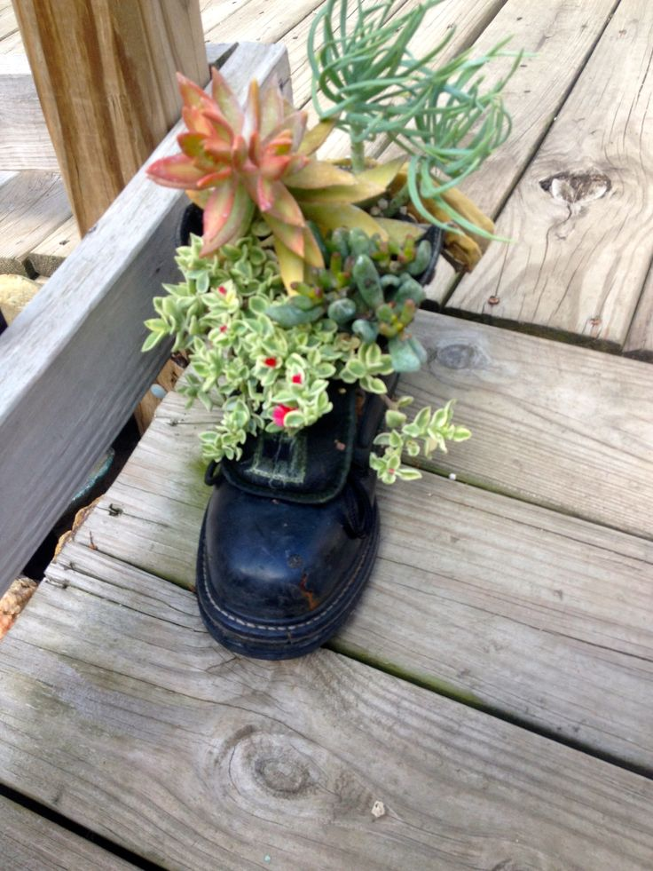Cute succulent idea for an old boot succulents and for Idea center dilshad garden