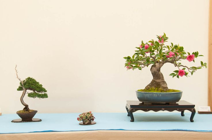 proflowers japan
