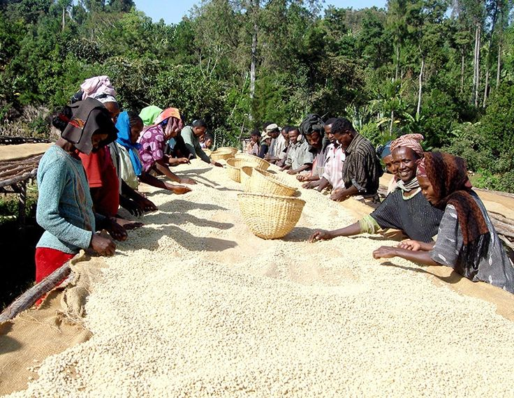 Rwandan Fully Washed AA Inzovu Single Origin Coffee Beans