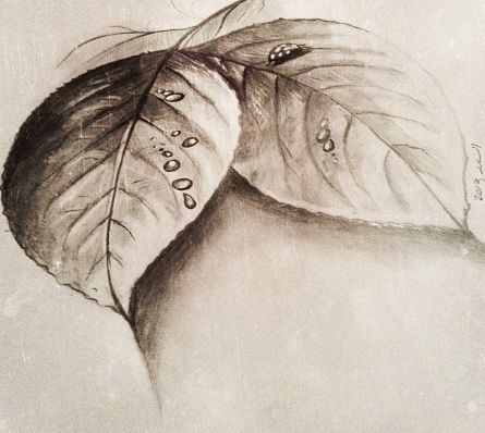 detailed pencil drawing