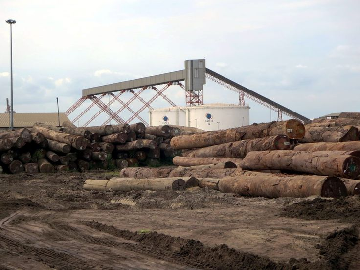 Rainforest logs are piled for export in the port of Pointe-Noire, Republic of Congo.