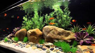 AQUARIUM SUPPLIES, ACCESSORIES AND EQUIPMENT: Freshwater Aquarium Temperature Control: Proper He...