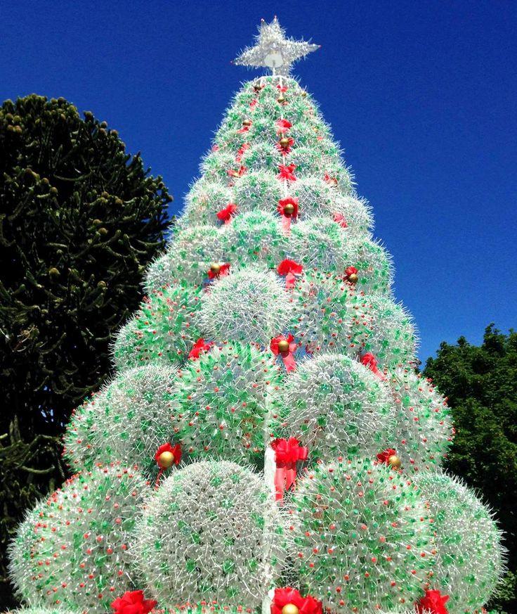 Arbol de navidad en san martin de los andes argentina for Arboles perennes en argentina