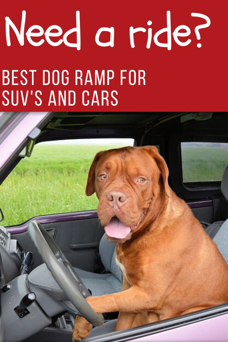 Best Dog Ramp for Cars and SUV's