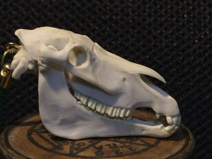 牛頭骨 - Google 検索