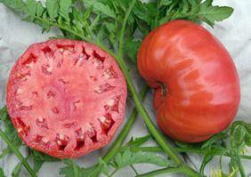 Radiator Charlie's Mortgage Lifter Tomato