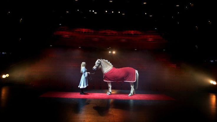 I den nyaste storfilmen til Disney, Frost, har ein fjordhest fått rolla som slottshest. No håpar fjordhestmiljøet dette skal auke populariteten til den utryddingstruga hestearten.