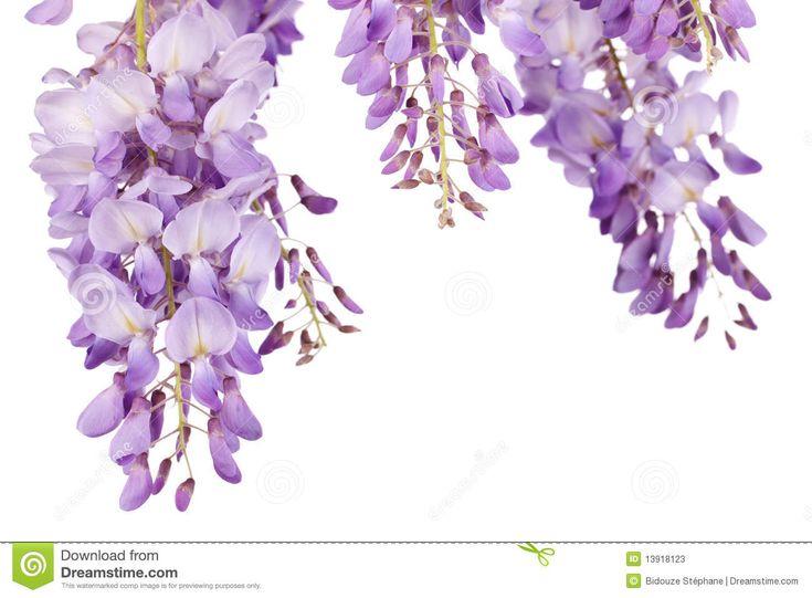 wisteria - Google Search