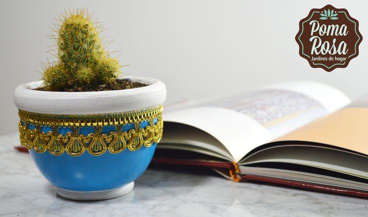 Regálate esta hermosa compañera que llenará de vida tu hogar!  El cactus es muy fácil de cuidar, sólo se riega una sola vez a la semana!!  Precio: $25.000 (Tenemos servicio de Domicilio a Medellin y otras ciudades del país)