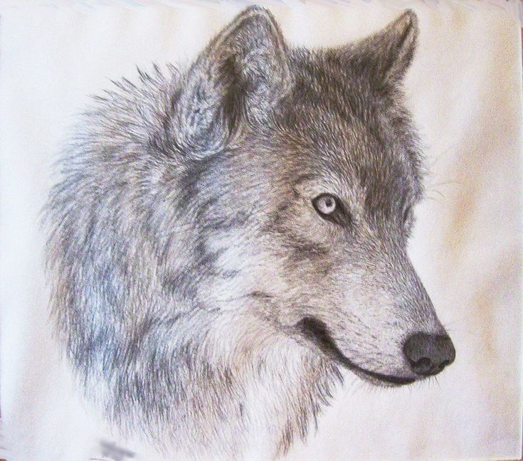 Best 25+ Wolf head drawing ideas on Pinterest   How to draw wolf ...