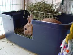 I can do this for my rabbit instead of his current kennel! i should have thought of that Tips for litter training rabbits, where was this when I needed it! #pets #rabbit #bunny