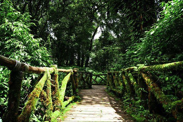 Dschungel-Treppe im Doi Inthanon Nationalpark