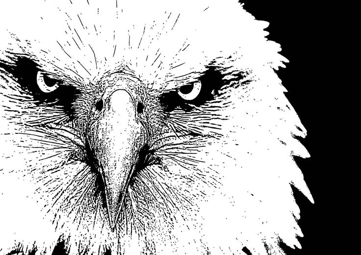 12 American Bald Eagle By Chris McCabe - DRAGAN GRAFIX, Stylish Vector Wall Art Posters That You Can Buy In High Resolution PDF Format And Print Any Size You Wish. Decorate Your Walls With Original Art. Only R350 Per Design. Many Designs To Choose From. I Also Create Custom Designed Vector Wall Art. For More Information Call Chris McCabe On 082 482 0076 OR Email chris@dragangrafix.co.za