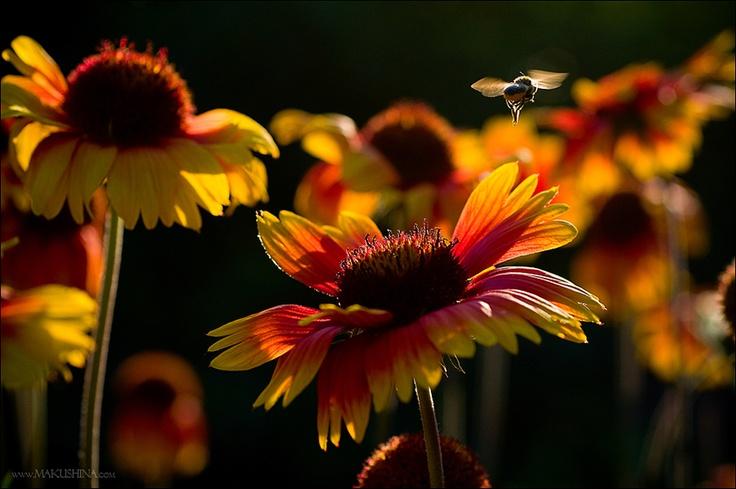 """""""En el silencio sólo se escuchaba un susurro de abejas que sonaba."""" Fdo.: Armonía imitativa: Photo"""
