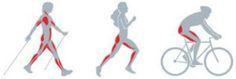 Nordic Walking, el ejercicio más completo.   www.haciendohuella.com
