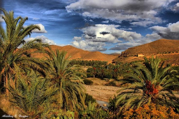 The desert oasis ...Algeria