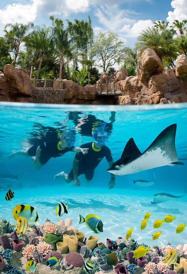 Discovery Cove - Ways to Get in the Water in Orlando