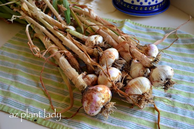 How To Make Garlic Spray to Keep Bugs Away: Gardens Ideas, Bugs Sprays, Keep Bugs Away, Diy Garlic, Veggies Gardens, Garlic Sprays, Bloom Blog, Gardens Outdoor, Gardens Growing