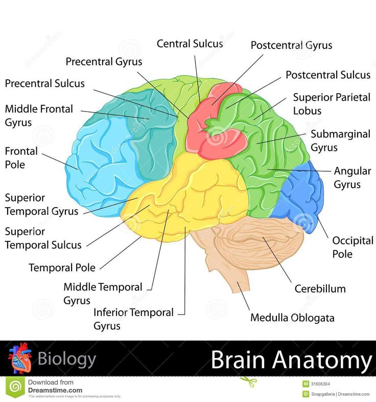 Pin by Brittany Wells on Neuropsychology | Pinterest