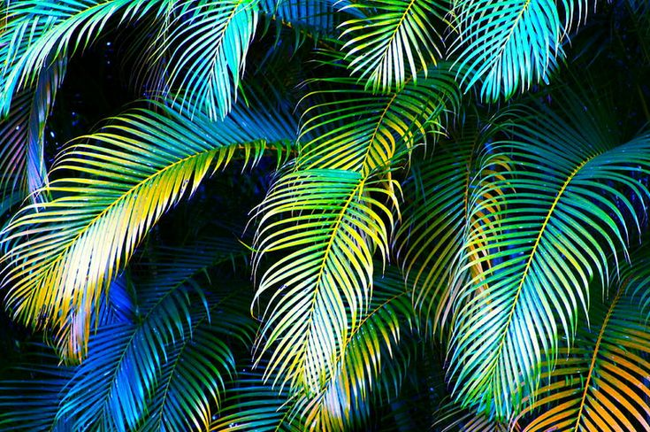 palm fronds tumblr - photo #15