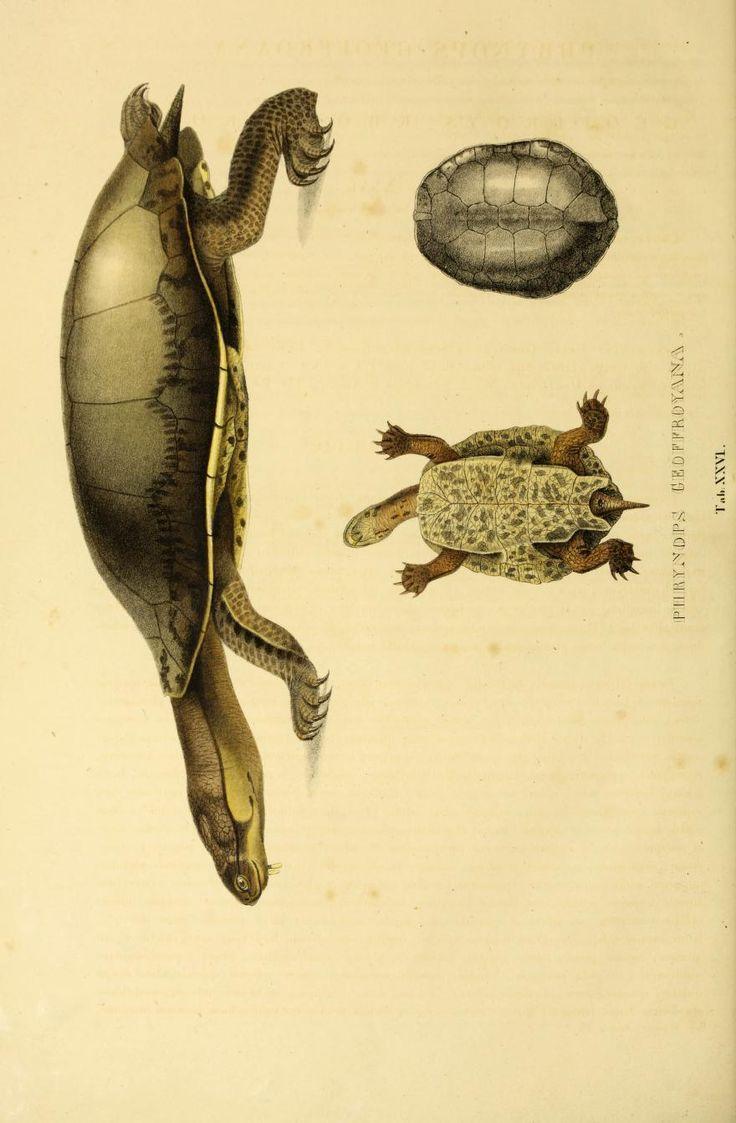 231 best dodo u0026 the tortoise images on pinterest animals