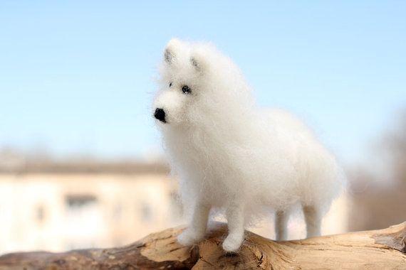 Samoyed dog miniature, samoyed dog portrait, pets portrait