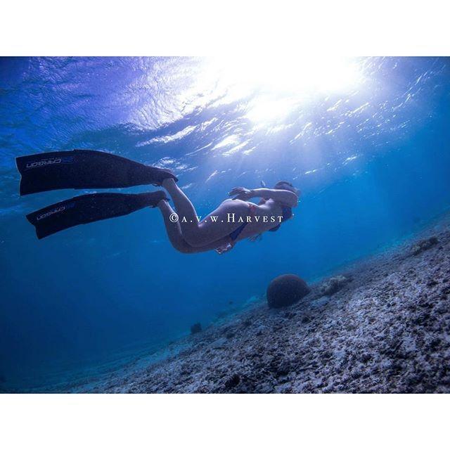 【dal_gram】さんのInstagramをピンしています。 《ロングフィンデビューおめでとう🤗  thanks #ocean model @_mayumaid_ ------------------------------ underwaterdress 撮ってます😄 海中撮影 依頼受付中🐠 水中ドレス撮影 用のアカウント作りました🌺↓よろしくお願いします🤗  @miyakojima_underwater_dress  underwaterdress  works→https://m.facebook.com/underwaterdress  #宮古島 #撮影 #ガイド #ロケーションコーディネート やってます👍料金・お問い合わせDMはお気軽に😊 ------------------------------ #miyakojima  #miyakoisland  #underwater  #underwaterphotography  #sea  #sealovers #oceanlovers  #snorkelingreport…