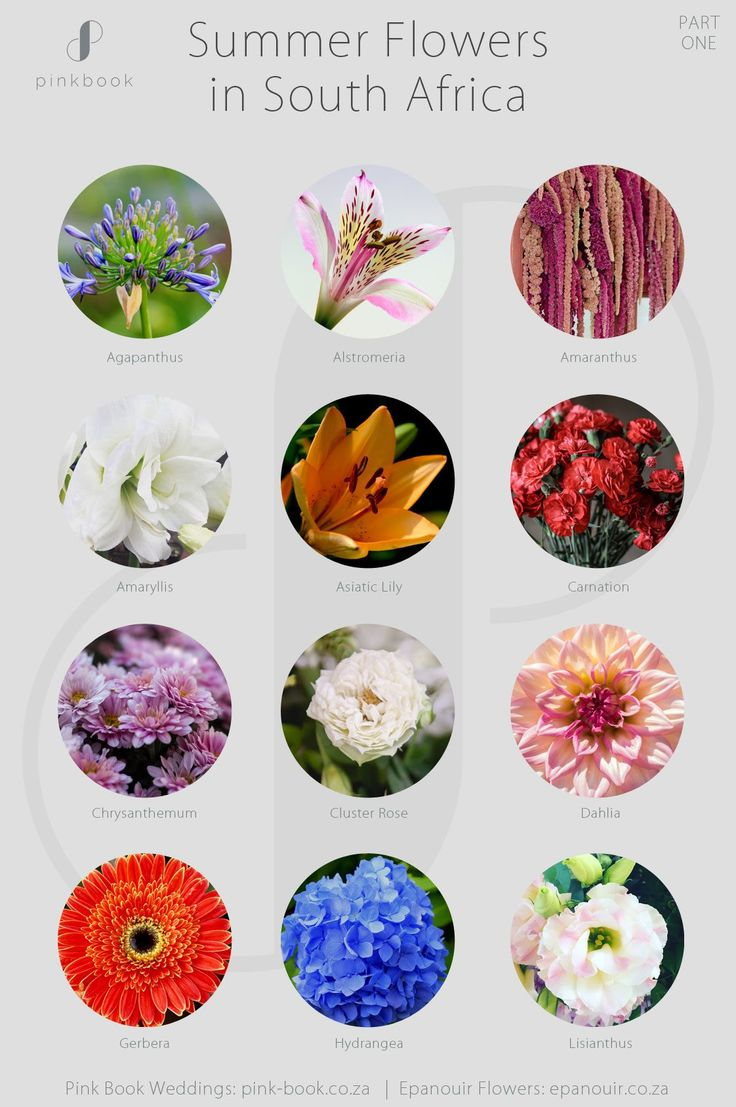 Summer Flowers South Africa by Pink Book