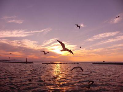 ケント佐渡へ渡る(2)日本海・海鳥・夕日・月   宮崎・シーガイアを100倍楽しむ方法